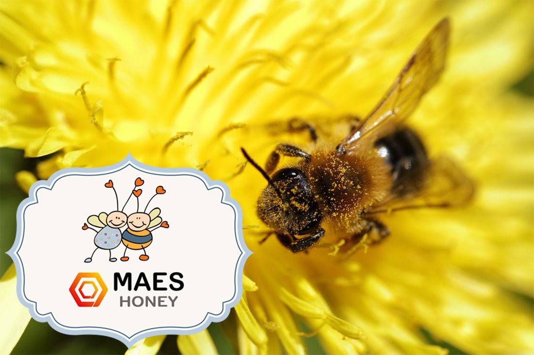 20-de-mayo-dia-mundial-de-las-abejas
