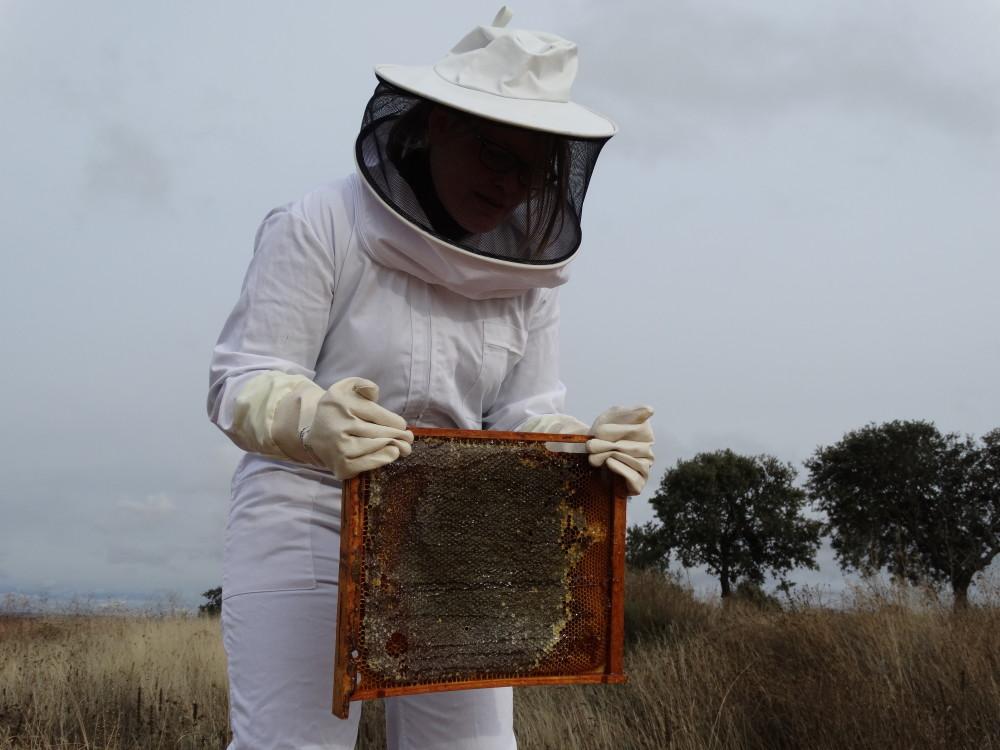 Spanish-honey