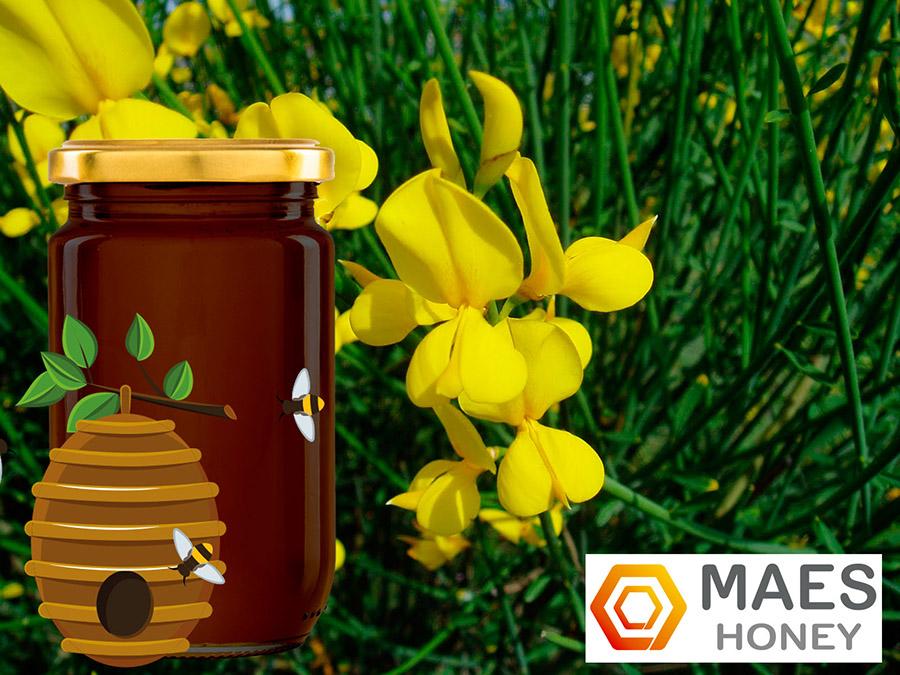 miel-retama-calidad