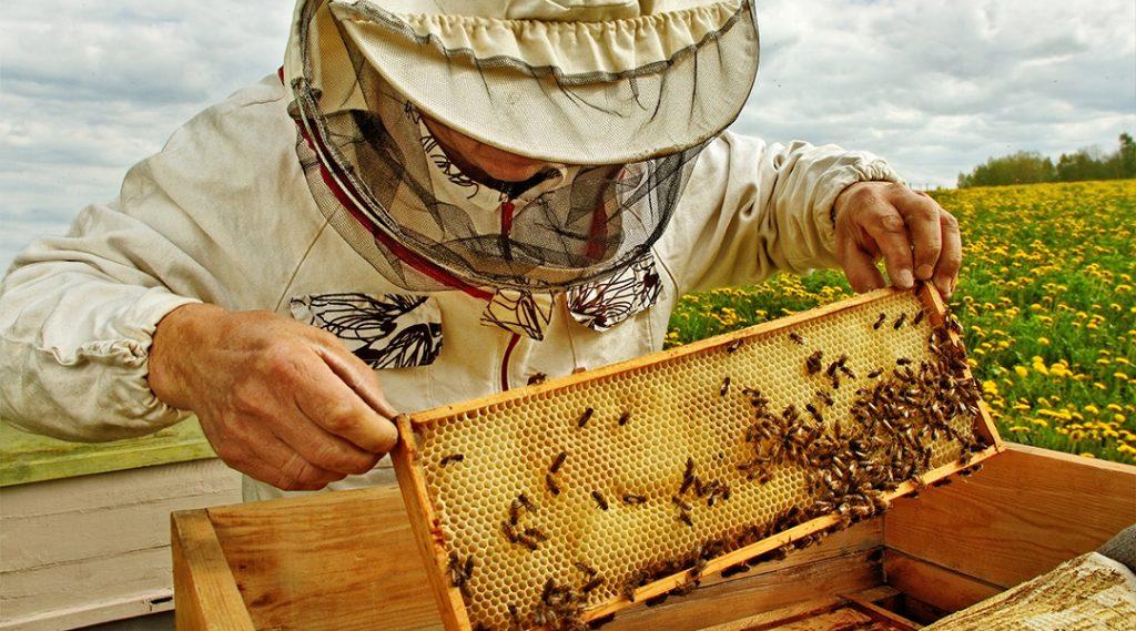 elaboración de la miel