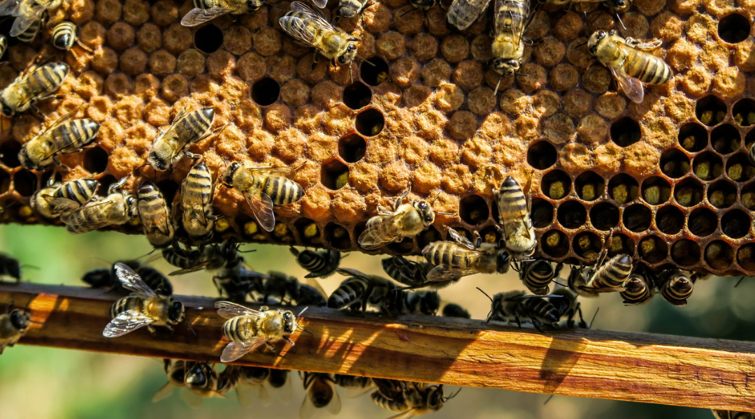 honey-moisture