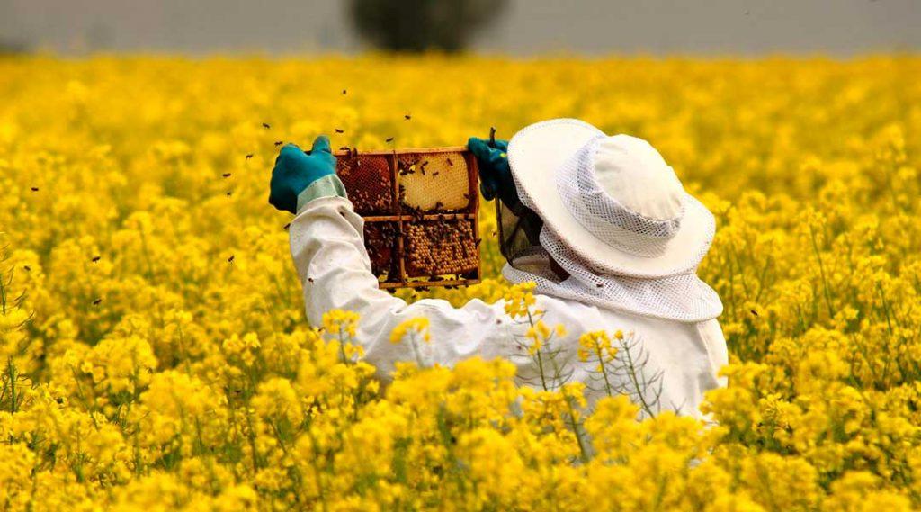 ramasser du miel