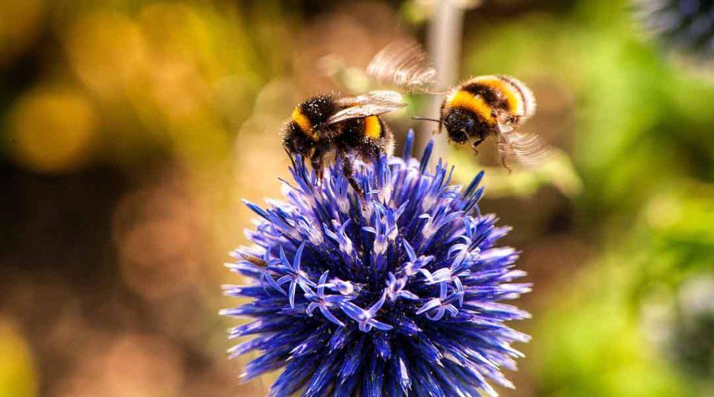 recolecta la miel