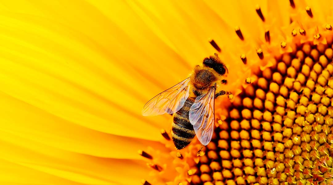 bees in summer
